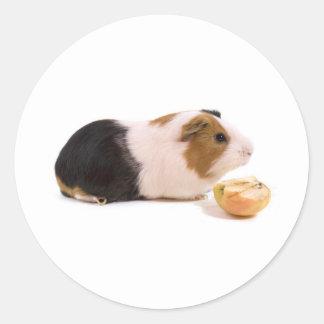 guinea pig eating year APPLE