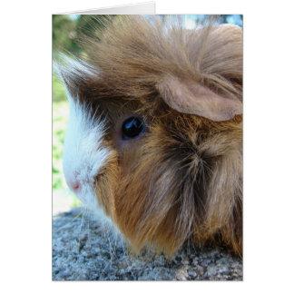 Guinea Pig Female Portrait Card