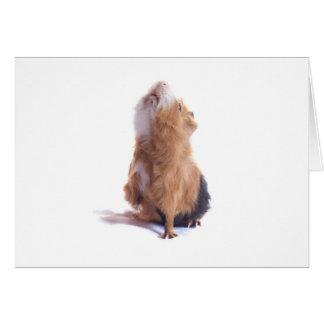 guinea pig, greeting cards