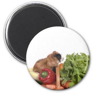 guinea pig in a basket of vegetables magnet