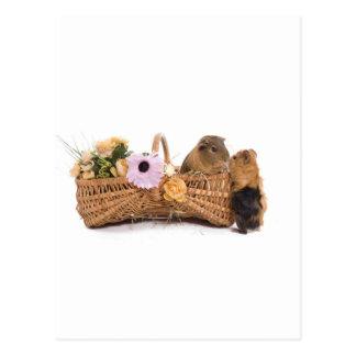 guinea pig in a basket postcard