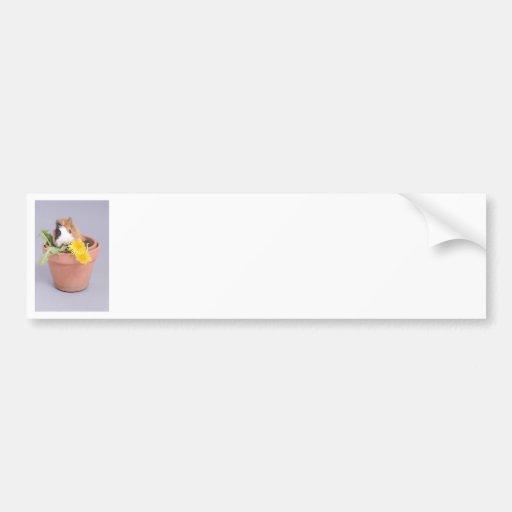 guinea pig in a flowerpot bumper stickers