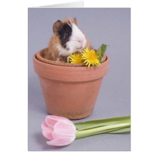 guinea pig in a flowerpot greeting card