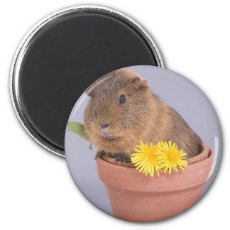 guinea pig in a flowerpot magnet