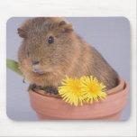 guinea pig in a flowerpot mousepad