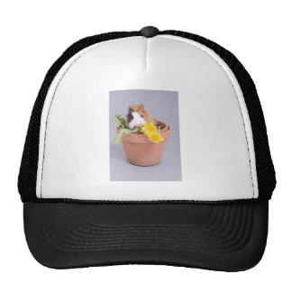 guinea pig in a flowerpot trucker hat