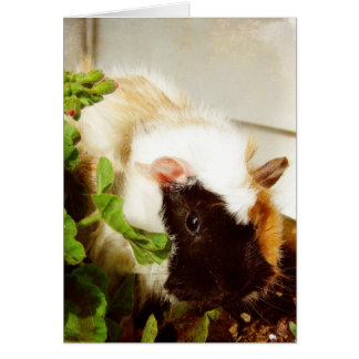 Guinea Pig in the Flowers Card