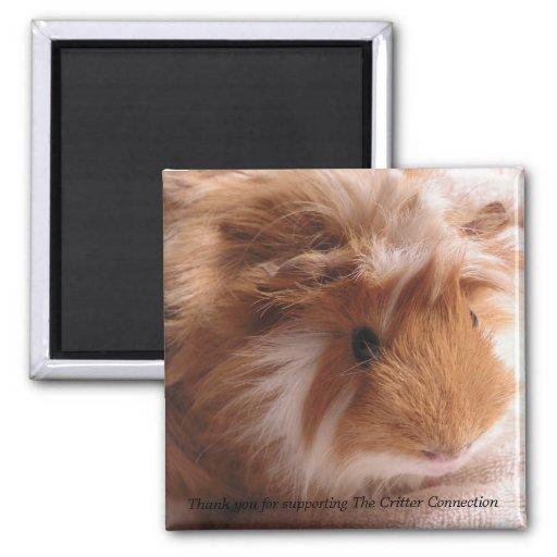 Guinea Pig Magnet #1