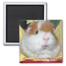 Guinea Pig Magnet #2