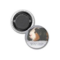 Guinea Pig Magnet #4