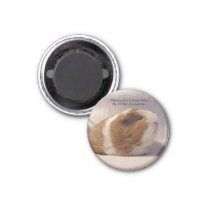 Guinea Pig Magnet #5