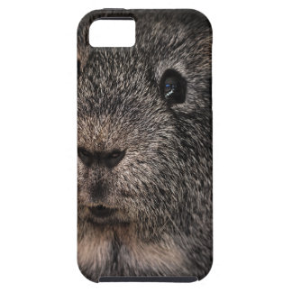 Guinea Pig Music Pet iPhone SE/5/5s Case