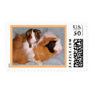 guinea pig n baby stamps