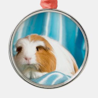 guinea pig round metal christmas ornament