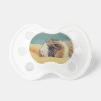 Guinea pig pacifier