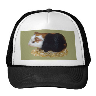 Guinea Pig Pet Hat