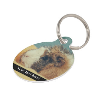 Guinea pig pet name tag