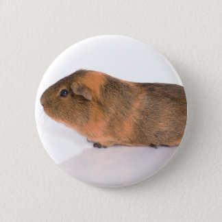 guinea pig pinback button