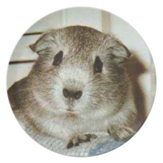 guinea pig plate