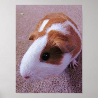 Guinea Pig Poster