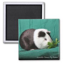 Guinea Pig Refrigerator/Locker Magnets