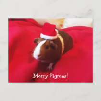 Guinea Pig Santa Claus Christmas Holiday