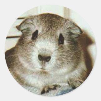 guinea pig sticker