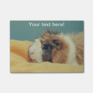 Guinea pig post-it® notes