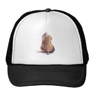 guinea pig, trucker hat