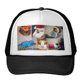 Guinea pig way of life. trucker hat