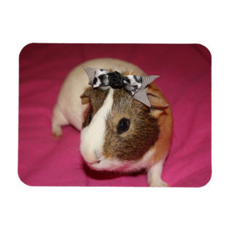 Guinea Pig With Bow 2 Magnet
