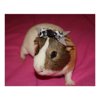 Guinea Pig With Bow 2 Print