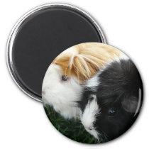 guinea pigs 2 magnet