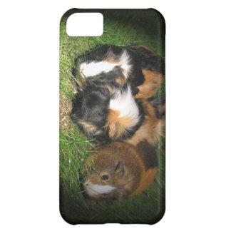Guinea pigs (cavies) case for iPhone 5C