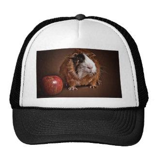 guinea pigs trucker hats