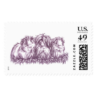 Guinea Pigs I Postage Stamps