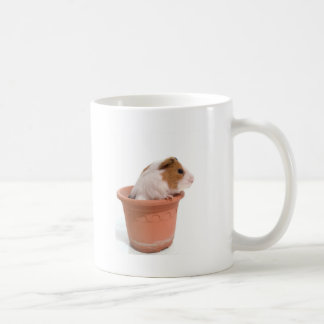 guinea pigs in has flowerpot classic white coffee mug