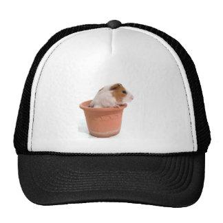 guinea pigs in has flowerpot mesh hats