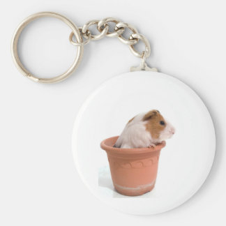 guinea pigs in has flowerpot keychain