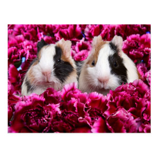 Guinea Pigs in the Flower Bed Postcard