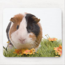 guinea pigs on a lawn mouse pad
