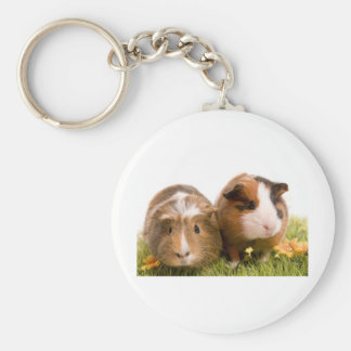 guinea pigs one has lawn basic round button keychain