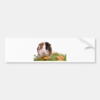 guinea pigs one has lawn car bumper sticker