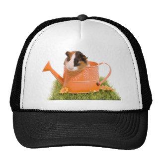 guinea pigs one has lawn trucker hats