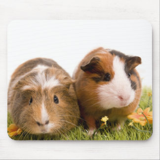guinea pigs one has lawn mouse pad
