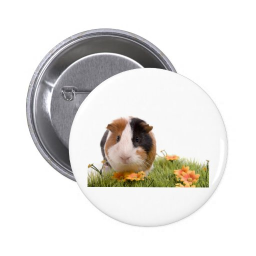 guinea pigs one has lawn pinback button