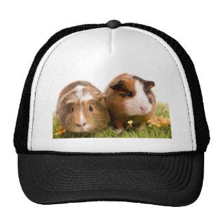guinea pigs one has lawn trucker hat