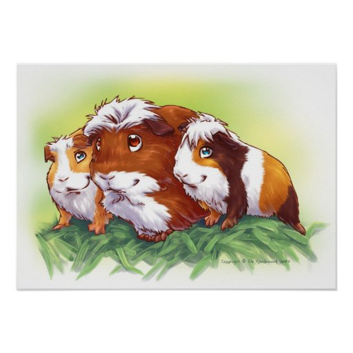 Guinea Pigs Poster
