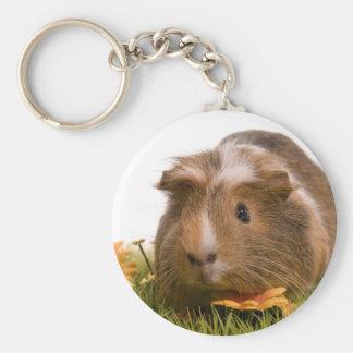 Guinea pigs se tiene lawn llavero redondo tipo pin