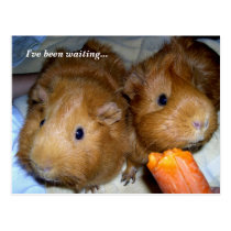 Guinea Pigs Student Welcome From Teacher Postcard